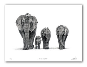 The Studio Art Gallery - African Elephants - Paper Print