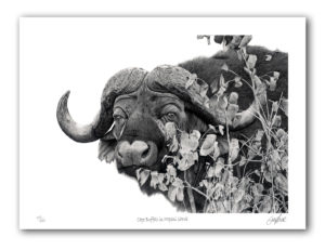 Paper Print - Cape Buffalo in Mopani Shrub