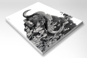 The Studio Art Gallery - Rectangle Stretched Canvas - Cape Buffalo