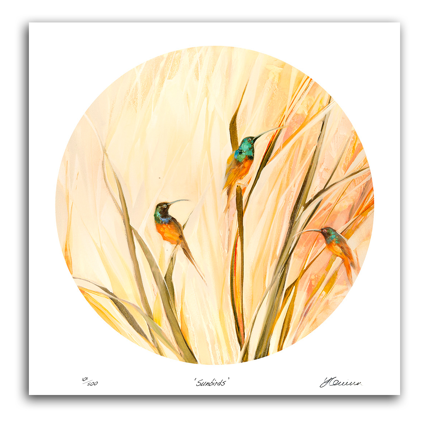 The Studio Art Gallery - Sunbirds by Yola Quinn - Archival print on Paper